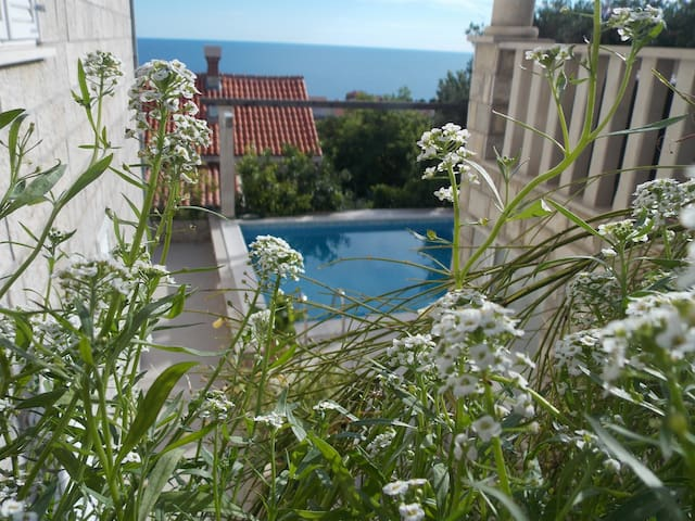 VILLA KLAIC GUESTHOUSE  Sea view