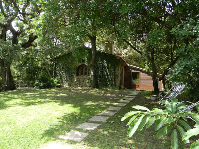 house in the woods with jacuzzi - Castagneto Carducci - House