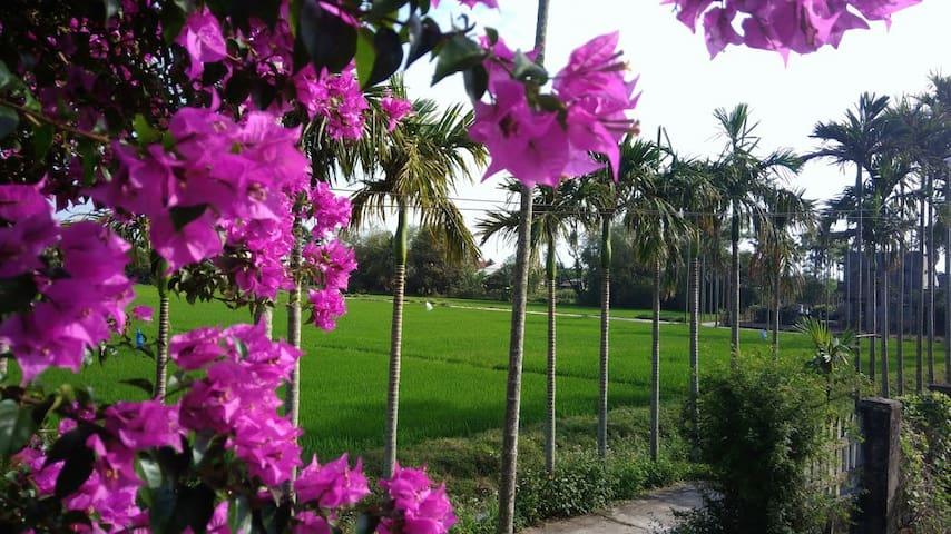 FLOWER VILLAGE 3 - GREEN RICE FIELDS VIEW