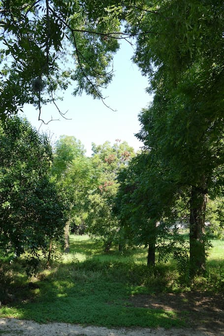 The house sits on the edge of a peaceful pecan grove. This is your view off the porch.