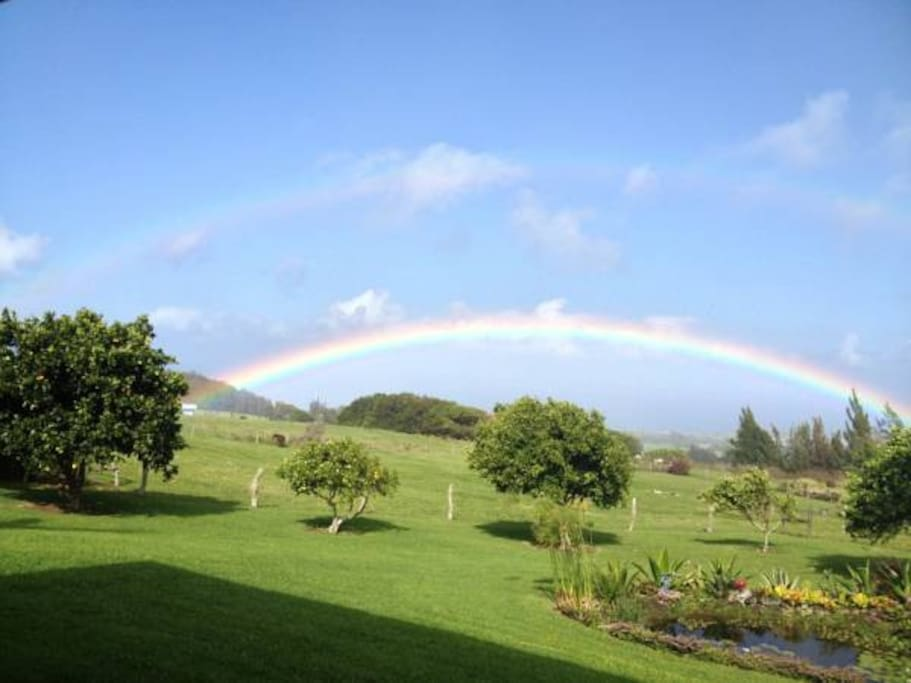 Witness beautiful rainbows across a tapestry of rolling hills to the kohala coastline