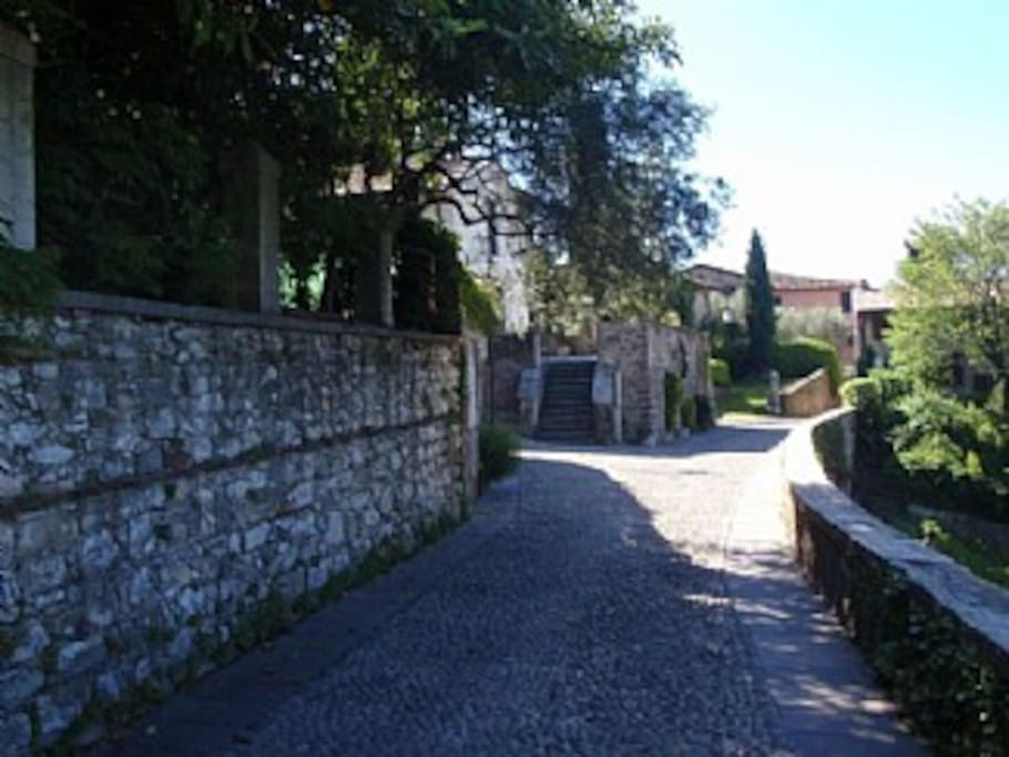 The street leading to the house.