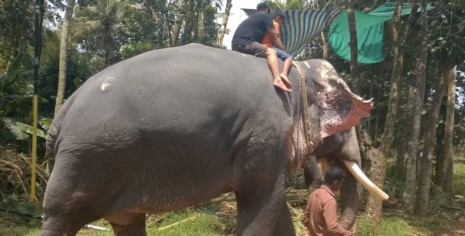 Elephant Safari in Kerala