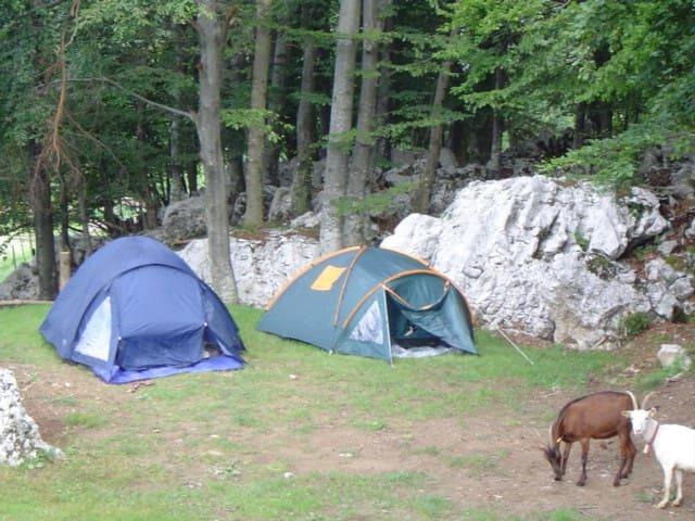 Camping site in Robidišče
