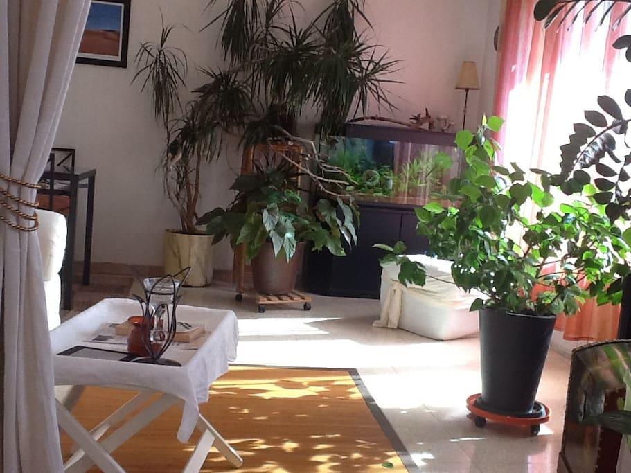 chambre dans appartement harmonieux appartements louer. Black Bedroom Furniture Sets. Home Design Ideas