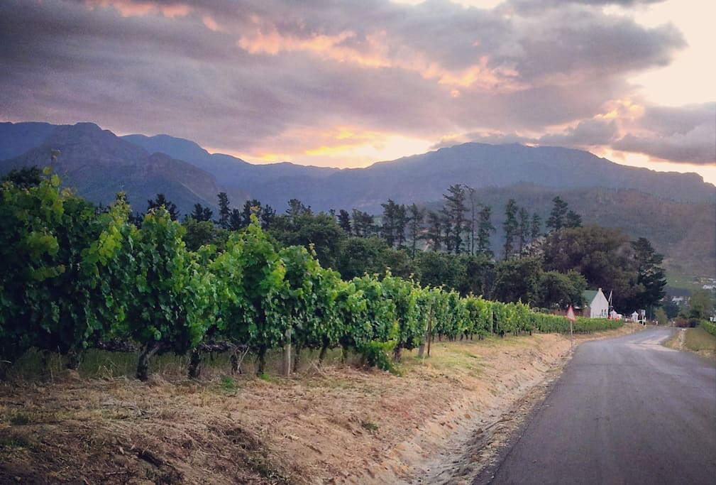 VINEYARDS | Chamonix wine estate (and Reuben Riffel's Racine restaurant) is at the top of our street.