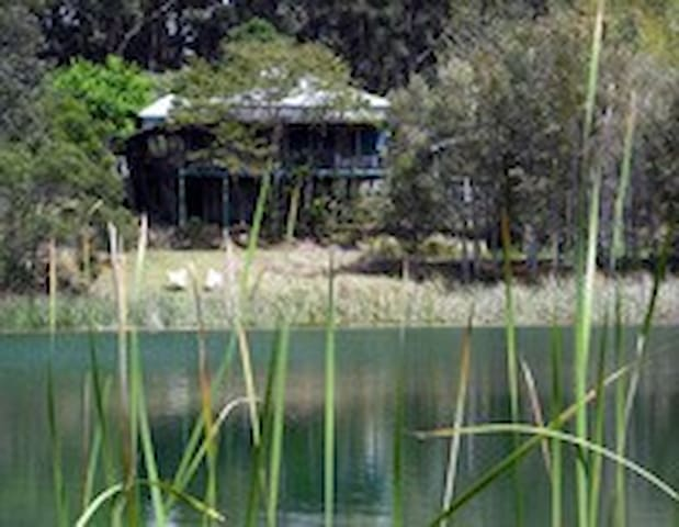Mother of Ducks at Cloudlake - Ravensbourne