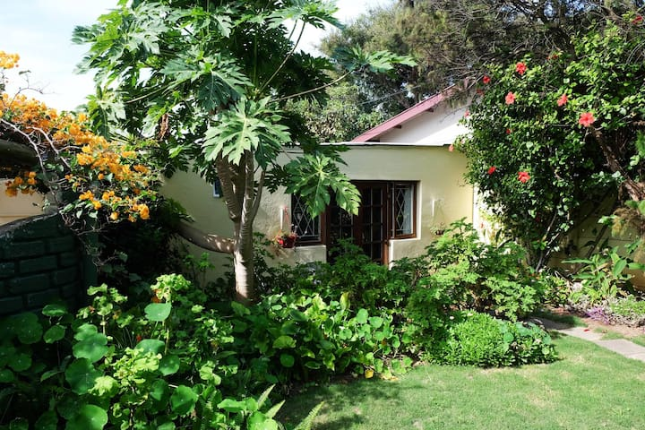 The Best Exotic Frangipani Happy Beach Cottage