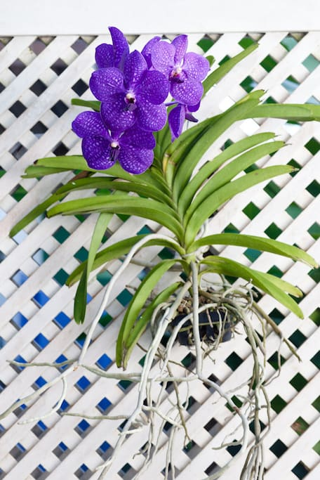 orquídeas pela casa