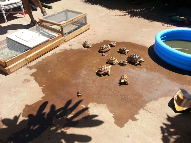 Tortoise and bird refuge at beach!#2