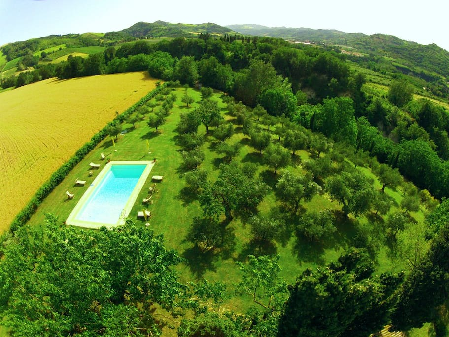Panoramic view, swimming pool and olive plants