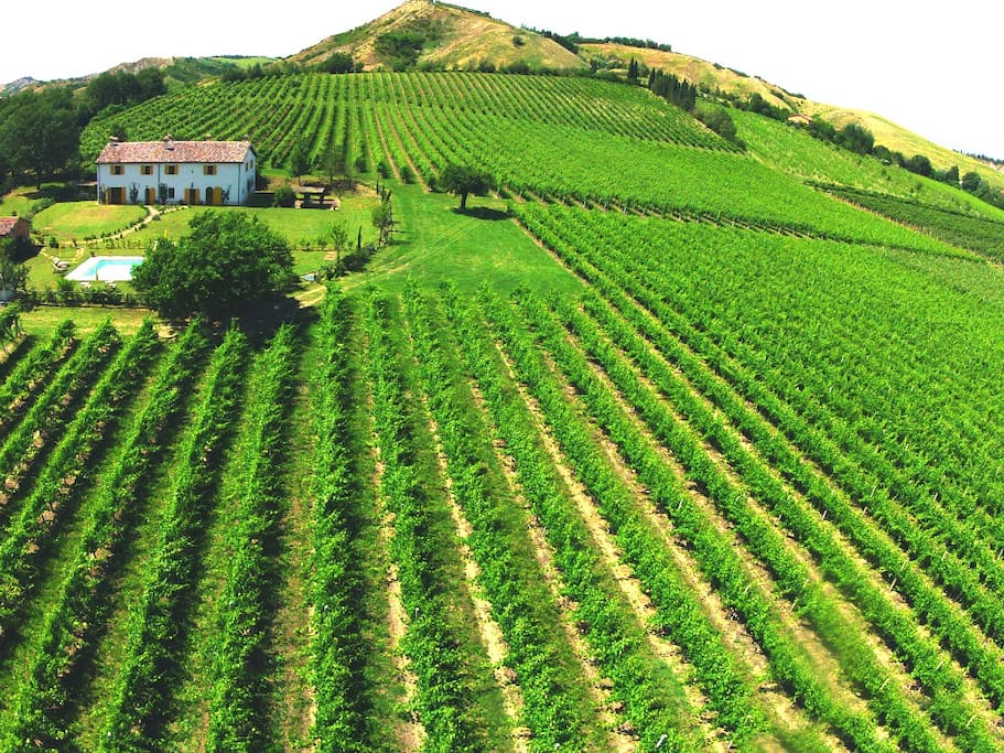 Panoramic view of Podere Casetta with vineyards