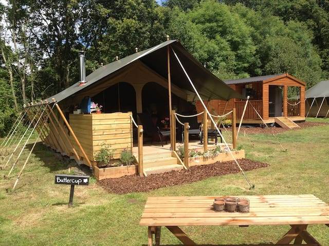 Daisy meadows safari tents  - Uffculme - Tent