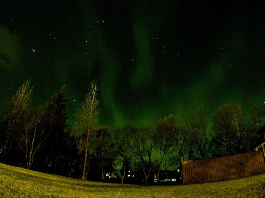 Northern lights - from the garden