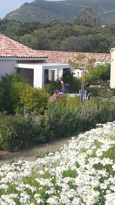 Terrasse donnant sur jardin