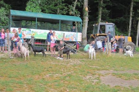 Proximité ZooParc de Beauval - Seillac - Other