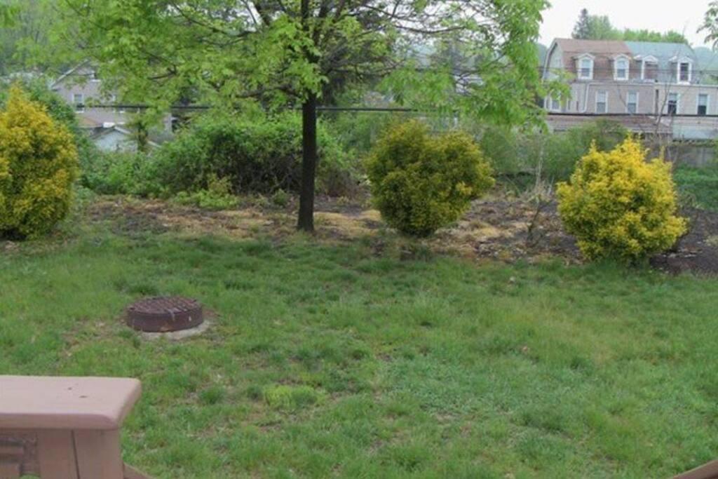 open backyard