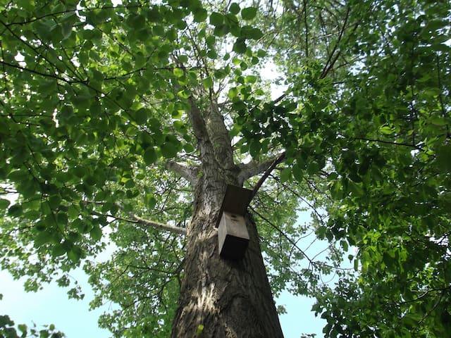 Tuin: boom met nestkast voor specht