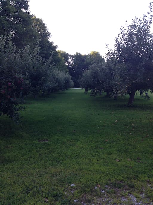 18 Apple trees which are sprayed and manicured making wonderful apples to eat!