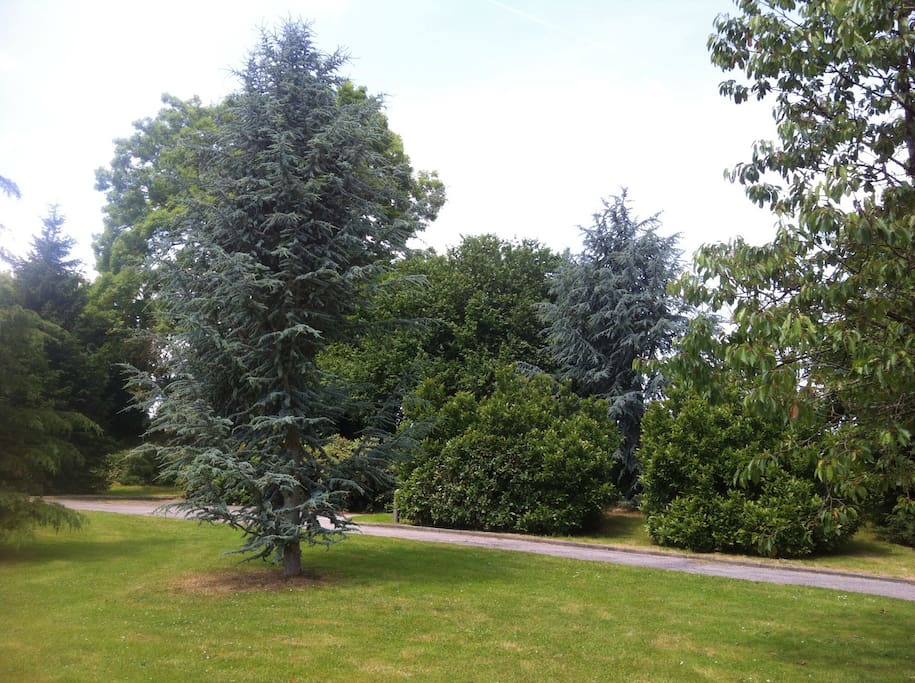 Grande allée traversant le jardin pour accéder à la maison. Un stationnement est prévu pour les voitures.