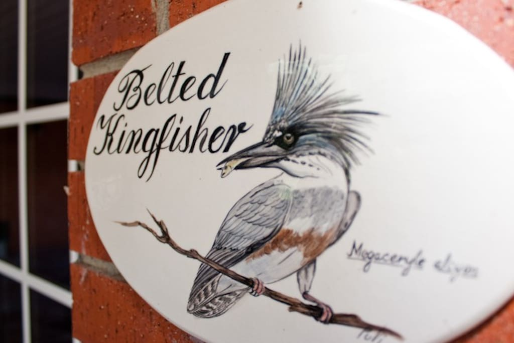 The Belted Kingfisher is one of our ground-access courtyard rooms