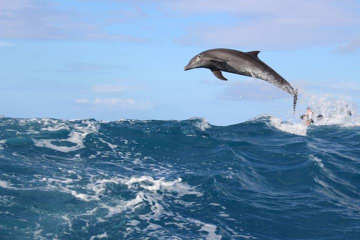 le show des dauphins à TIPUTA
