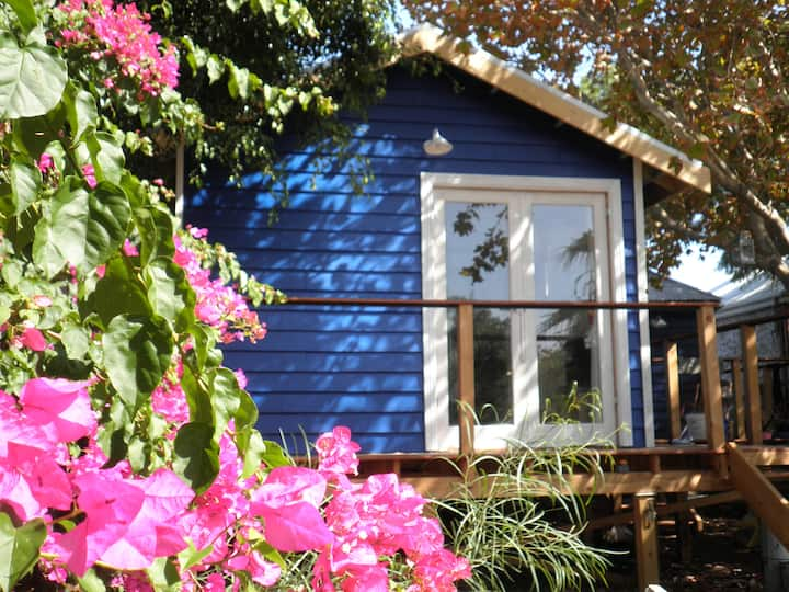 Blue Lilly! Fremantle Garden Studio