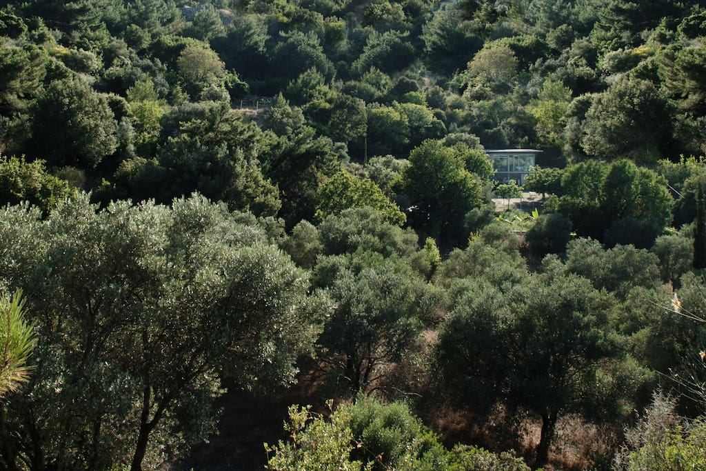 The peaceful hidden farm house surrounded by the olive trees