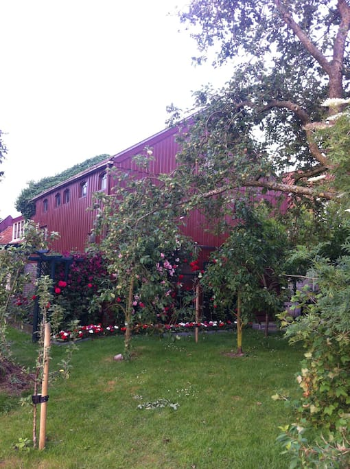 Garden with beautiful flowers and our own fruit trees