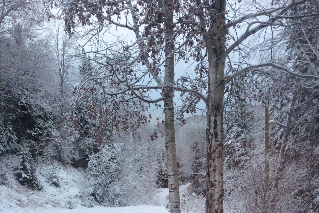 Nos blancs hivers