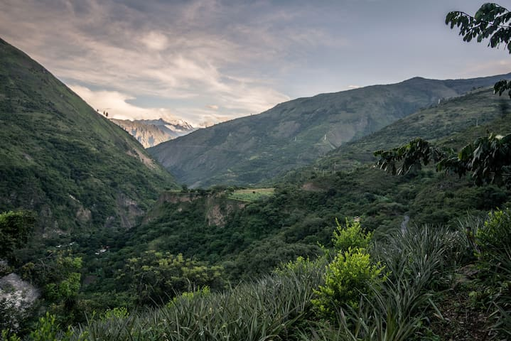 Cloud Forest Homestay Machupicchu 3