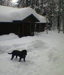 Cozy room in cozy cabin! Pets welcome small fee. - Mount Shasta