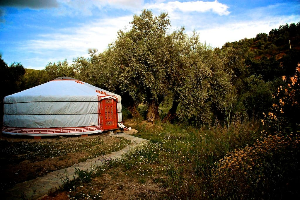 Quite a sensation sleeping in a yurt, amongst the olive trees and next to a  stream.