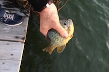 And catch one!  (this guy was released :))