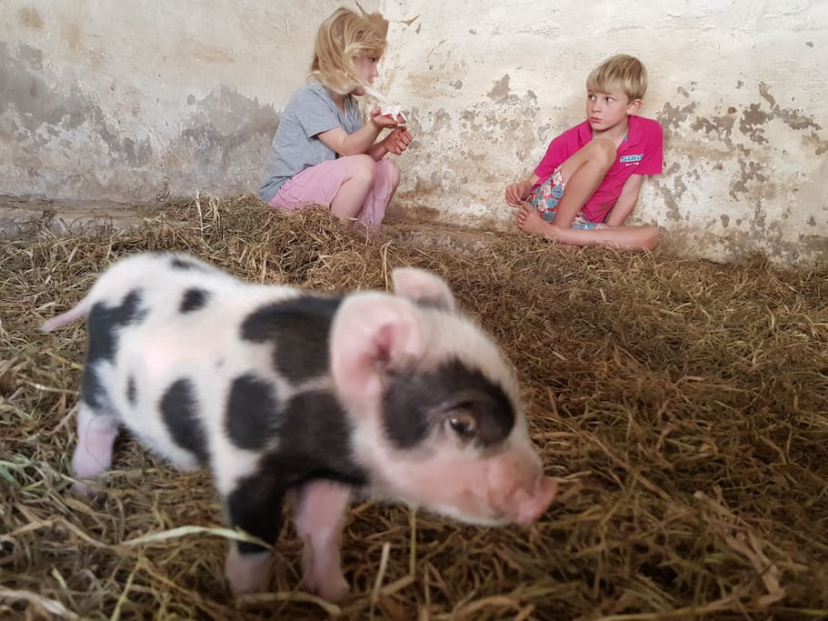 Our first piglets