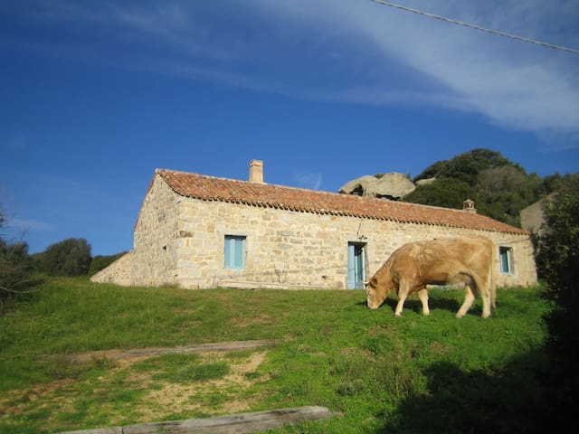large country cottage  by the beach - Santa Teresa di Gallura - บ้าน