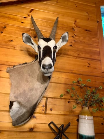 What's a Gemsbok anyway?  You're looking at one. :)  A  South African Antelope. You will meet ours in the Great Room.