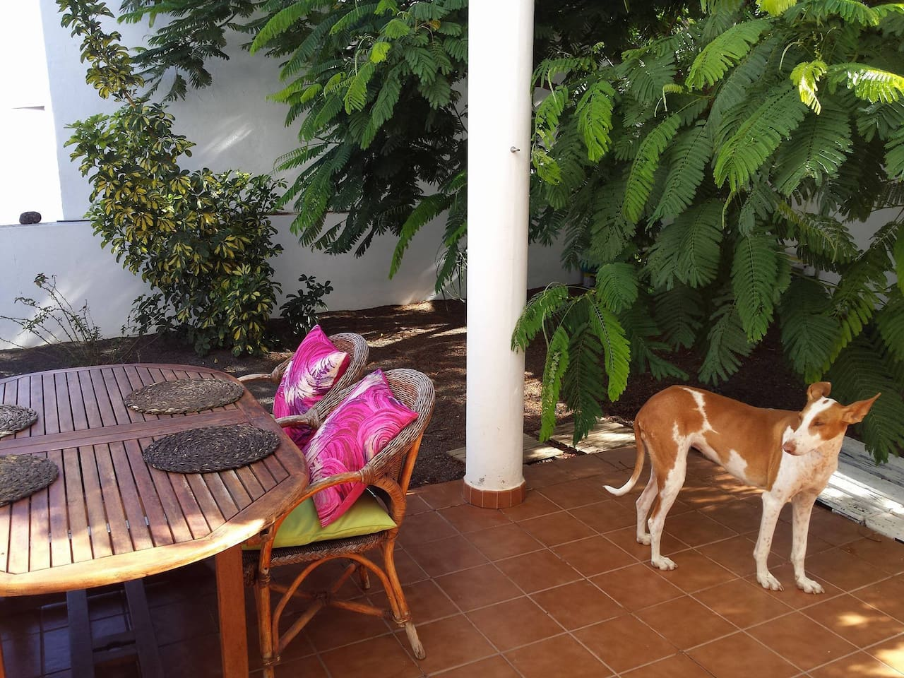 Villa África: Amplio y tranquilo adosado para disfrutar de tus vacaciones en Lanzarote, ademas de estar perfectamente ubicado, la casa consta de tres dormitorios, dos baños, cocina, terrazas, salón... seras bien recibido ya vengas solo, en pareja o con amigos, estamos en un pueblo llamado Tías en donde podrás encontrar restaurantes, supermercado, gasolinera etc a parte de estar a 10 minutos de la playa. Solo tenemos un requerimiento para ti y es que te gusten los animales, ya que Lola y yo seremos vuestras anfitrionas.