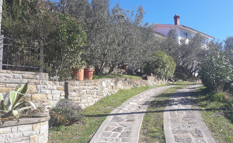 House among olive trees with a sea view - Hrvatini - Ház