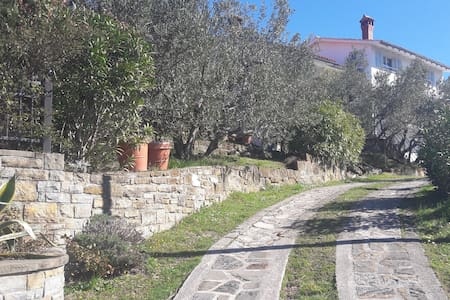 House among olive trees with a sea view - Hrvatini - Hus