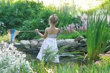 Back yard pond. July