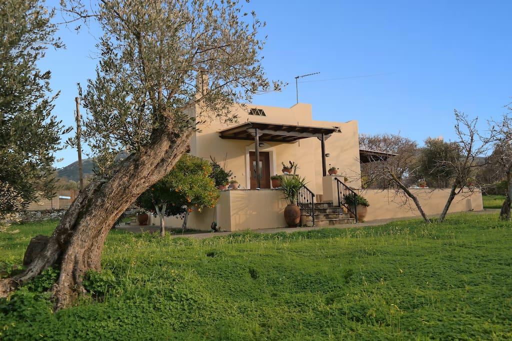 Olive Villa Exterior View
