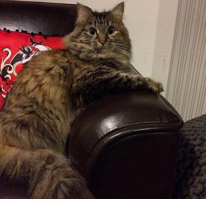 Our cat Milo