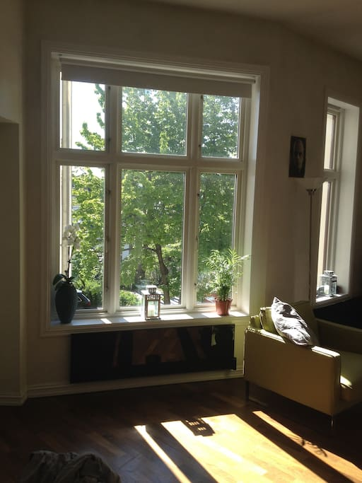 The living room/dining room/ kitchen is kept very light by the huge windows, typical for Frogner.