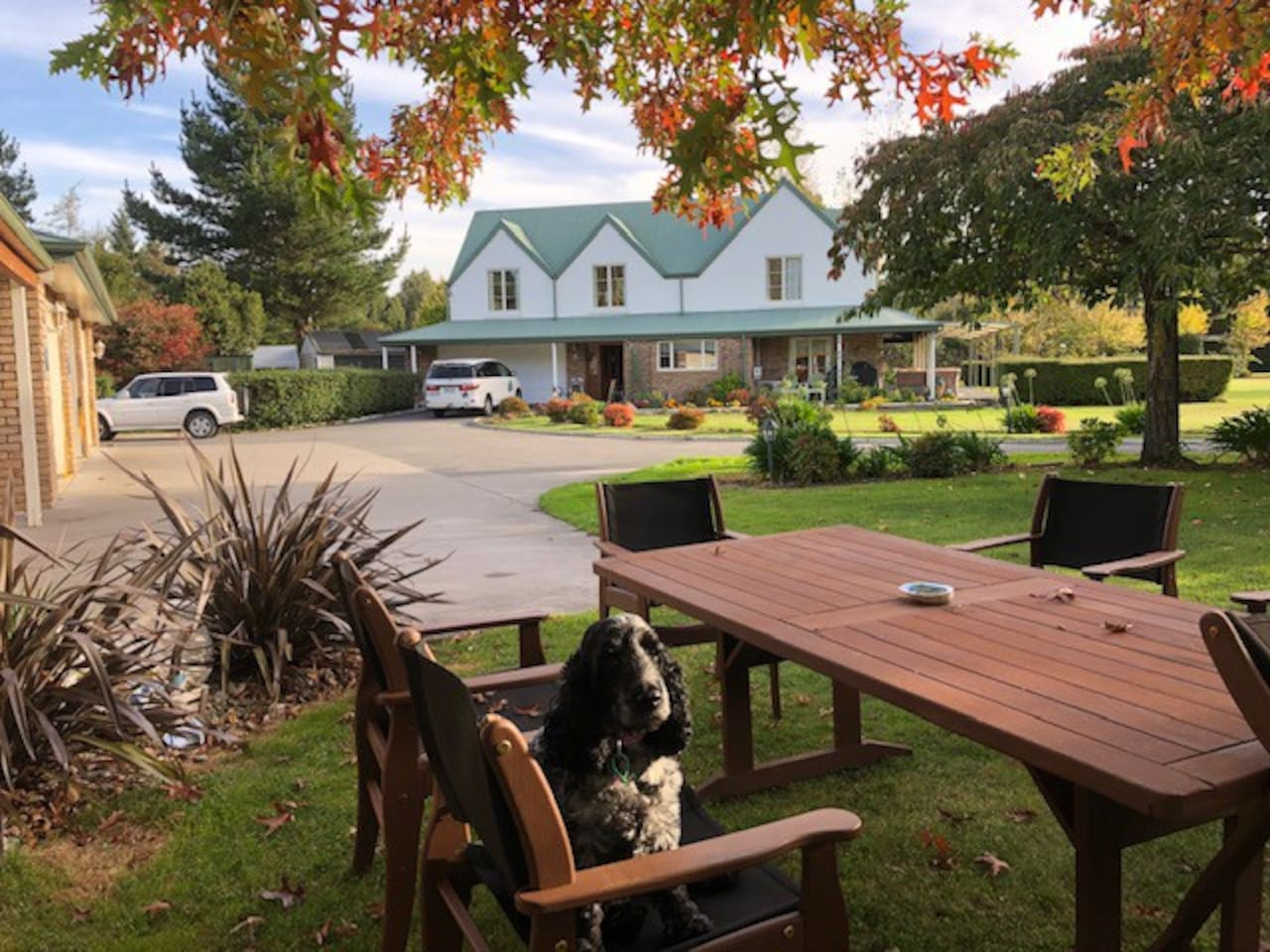 Mandeville Lodge is situated in a quiet cup-de-sac amongst an acre of gardens - enjoy free dog pats from Molly, the english cocker spaniel!