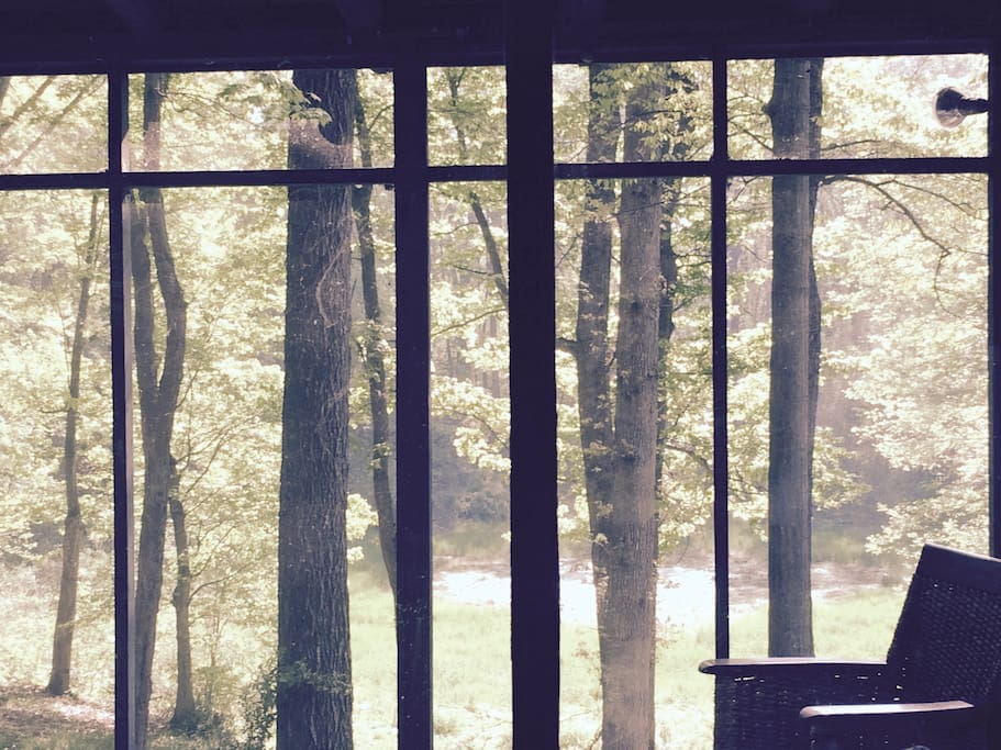 view of forest from screened porch