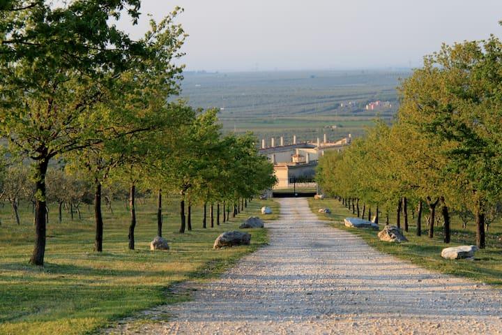 Viale alberato dell'ingresso Masseria