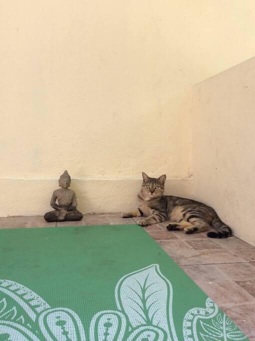 Homey our Garden Cat enjoys Yoga & Meditation with Bellyrubs