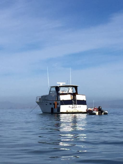 Large classic motor yacht boats for rent in vallejo for Motor boat rental san francisco