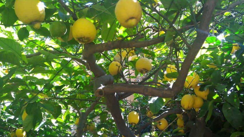 Giardino degli Limoni - Casa Santa - Dům